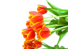 Bouquet of orange tulips on a white background Stock Images