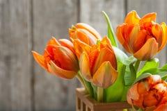 Bouquet of orange tulips royalty free stock photo