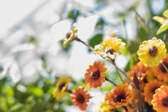 Fresh Flowers on abstract blurred background stock photography