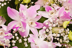 Bouquet from orchid Royalty Free Stock Image