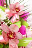 Bouquet orchid Orchidaceae Stock Photography