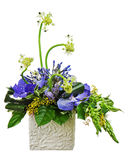 Bouquet from orchids and Arabian Star flower (Ornithogalum arabi Royalty Free Stock Photo