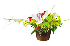 Bouquet from orchids in dark vase isolated on white background. Royalty Free Stock Photography