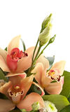 Bouquet of orchids and eustoma isolated Royalty Free Stock Images