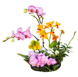 Bouquet of orchids flowers Royalty Free Stock Photography