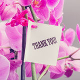 Bouquet of orchids with a Thank You note. Bouquet of fresh pink phalaenopsis orchids with a Thank You note expressing appreciation for a service or gift, close Stock Image