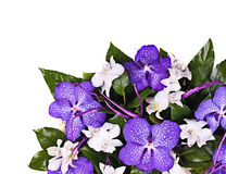 Bouquet of orchids Stock Image