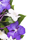 Bouquet of  orchids Royalty Free Stock Images