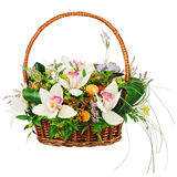 Bouquet from orchids in in wicker basket isolated on white backg Royalty Free Stock Photography