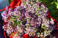 Bouquet of oregano closeup. The bouquet of oregano closeup Stock Images