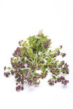 Bouquet of Oregano. On a white background Stock Photo