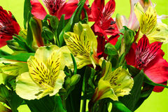 Bouquet of ornamental lilies on a green background. Bunch of colorful alstromeries on a green background Stock Images