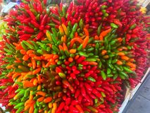 Bouquet of Ornamental Peppers royalty free stock images