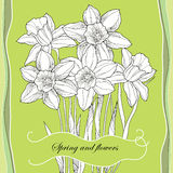 Bouquet with ornate narcissus flower or daffodil on the green background. Royalty Free Stock Images