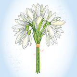 Bouquet with ornate Snowdrop or Galanthus in white on the light blue background Stock Photography