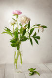 A  bouquet of  pale peonies Royalty Free Stock Photo
