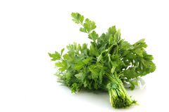 Bouquet of parsley Royalty Free Stock Photography