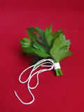 Bouquet of parsley Stock Image