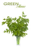 Bouquet of parsley in glass Stock Photos