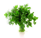 Bouquet of parsley isolated Royalty Free Stock Photo