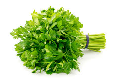 Bouquet of parsley on a white background. Isolated stock images