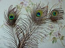 Bouquet of peacock feather. stock photo