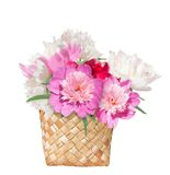 Bouquet of peonies in the basket isolated. Royalty Free Stock Photos
