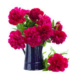 Bouquet of peonies in blue pot Stock Image