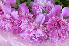 Bouquet of peonies Stock Photos