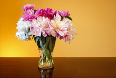 Bouquet of peonies in glass vase Stock Images