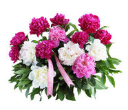 Bouquet of peonies isolated Royalty Free Stock Image
