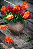 Bouquet of peonies and poppies Stock Photography