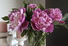 Bouquet of peonies Stock Image