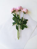 Bouquet of peonies Stock Images