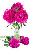 Bouquet of peonies in vase Royalty Free Stock Photos