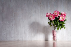 Bouquet of peonies in a vase against a blue wall. Stock Images