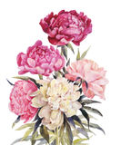Bouquet of peonies watercolor.Iillustration for vintage greeting. Bouquet of peonies watercolor. Hand-drawn illustration for vintage greeting card Royalty Free Stock Photos