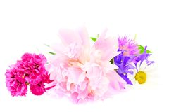 A bouquet of peony, carnation and clover isolated Royalty Free Stock Image