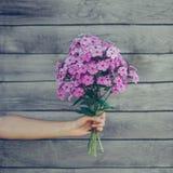 Bouquet of phlox flowers Stock Photo