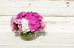 Bouquet Phlox flowers Stock Photography