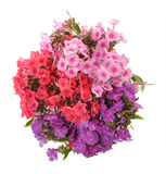 Bouquet of phloxes. Red, lilac, pink flowers phloxes are collected in a bouquet Royalty Free Stock Photo