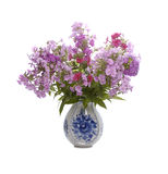 Bouquet of phloxes Stock Images