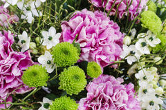 Bouquet of pink carnation, arabian star and green chrysanthemums. Bouquet of pink carnation, arabian star flower (ornithogalum arabicum) and green chrysanthemums Stock Image