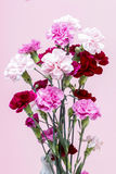 Bouquet of pink carnation flowers Stock Photos