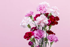 Bouquet of pink carnation flowers Royalty Free Stock Image
