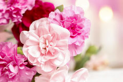 Bouquet of pink carnation flowers Royalty Free Stock Photos