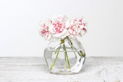 Bouquet of pink carnations in small glass vase. Stock Image