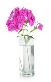 Bouquet of pink carnations in vase isolated Royalty Free Stock Photos