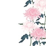 Bouquet of pink chrysanthemum on white background. Floral element for design, place for text. Can by use for wedding invitations and greeting cards royalty free illustration