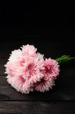 Bouquet pink cornflowers royalty free stock photography